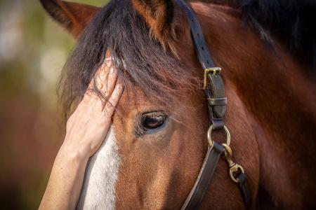 Pferdegestütztes Coaching - die Methode
